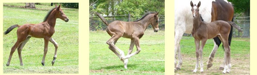 Foals 2013