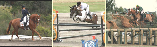 Dressage, showjumping & cross-country